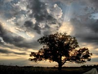 Tree in front of sun & clouds