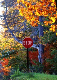 Stop Sign amongst trees